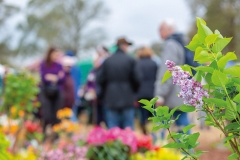 2018-04-28-Toby-Garden-fest-powderham-102