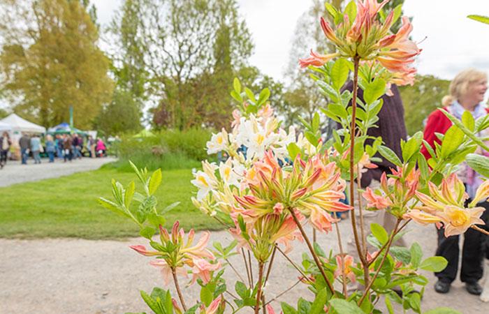 2019-05-03-2019-Toby-Garden-Fest-Powderham_Castle-082